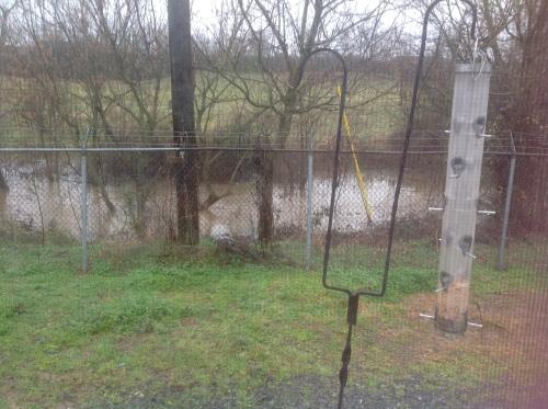 Creek behind my office