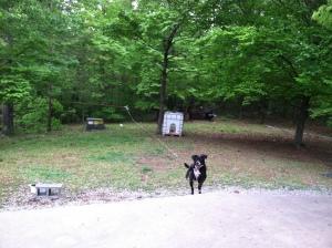 Duke running toward me.